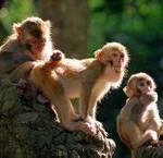 为什么用猴子作为太空实验?