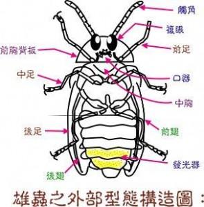 yinghuo2