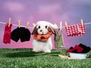 穿衣服的兔子