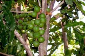 为什么说我国的 果树种类是世界上最多的