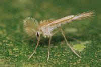 蚊子的生命周期很短