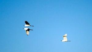 飞翔在高空的鸟儿