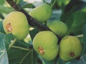果树种类最多