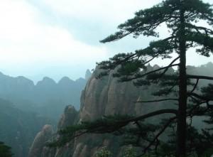 山上美丽的松树