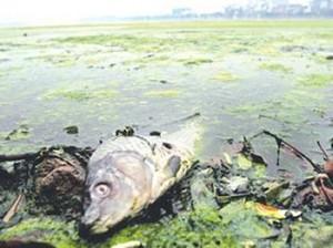 水污染问题严重