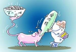 为什么要用瘦肉精来喂猪?