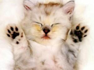 为什么说猫有九条命?