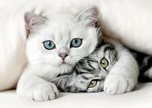 猫可以自我疗伤