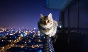 在护栏上玩耍的猫