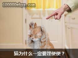 猫为什么要埋便便?