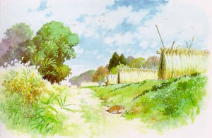 宫崎骏的书籍作品