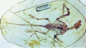 始祖鸟化石