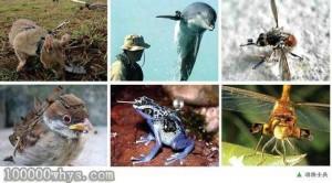 动物基因武器