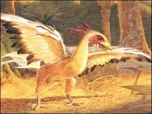 十万个为什么-始祖鸟