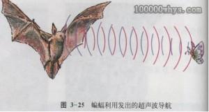 蝙蝠的次声波