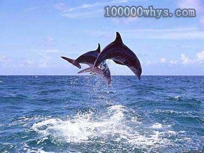 研究海洋哺乳动物14年的英格里德·维塞尔表示,世界上有许多关于海豚