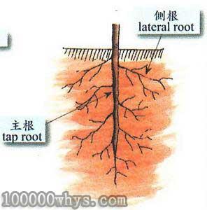 植物根会适应环境