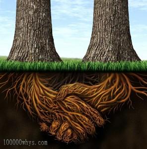 植物的根各式各样