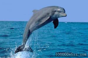 海豚是人类的朋友