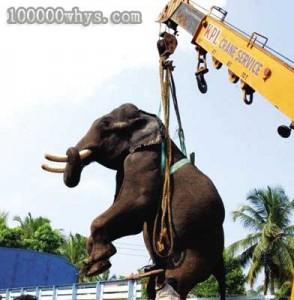 起重机吊起大象