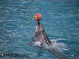海豚爱玩的习性