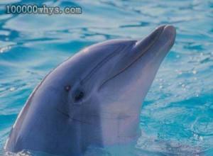海豚的照料天性
