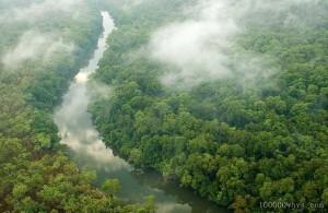 什么是热带雨林?