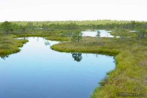 沼泽分为哪几种类型?