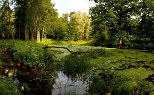 沼泽是怎样形成的?