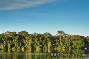 为什么热带雨林十分重要?