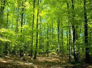 为什么森林能调节气温?