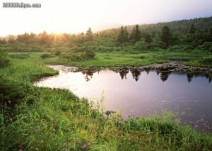 沼泽分为哪几种类型