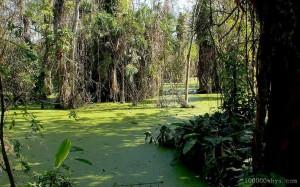 沼泽的形成