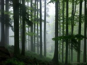 热带雨林十分重要