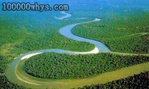 俯瞰热带雨林