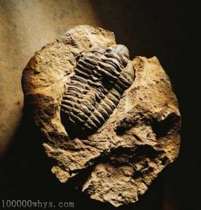 化石是怎样形成的?