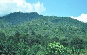 十万个为什么-热带雨林
