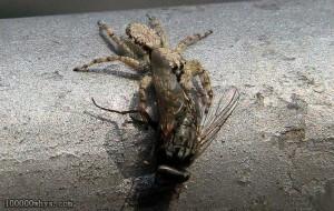 苍蝇怕的天敌