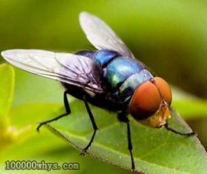 苍蝇怕什么?