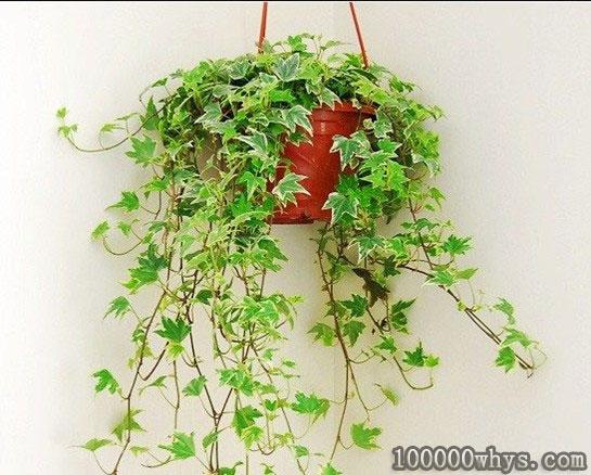 阴生植物为什么不怕照不到阳光