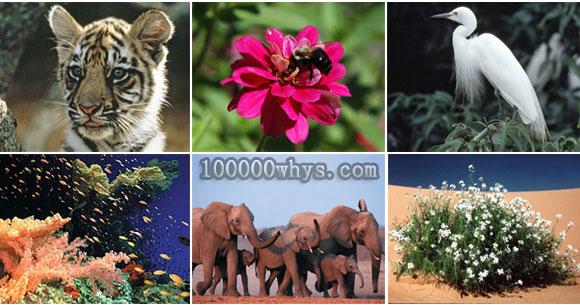 为什么生物多样性对人类至关重要