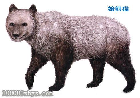 大熊猫的祖先是谁