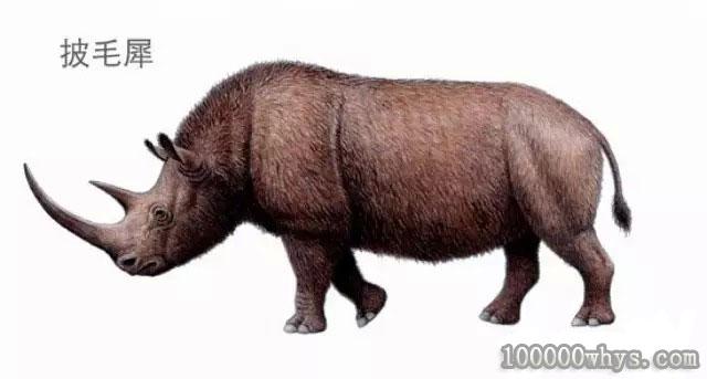 披毛犀是什么时候灭绝的
