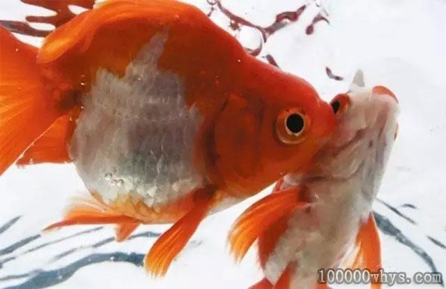 鱼为什么要不停地喝水