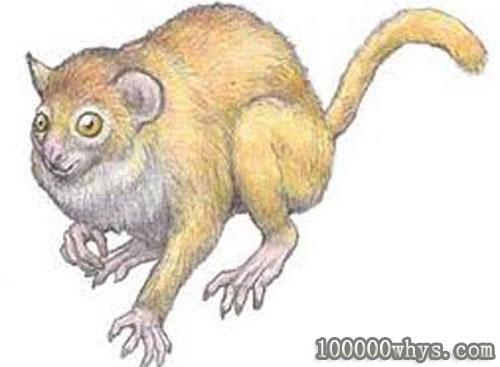 猴子的祖先长什么样