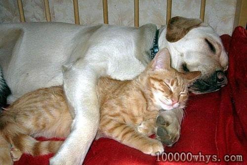 动物也会做梦吗