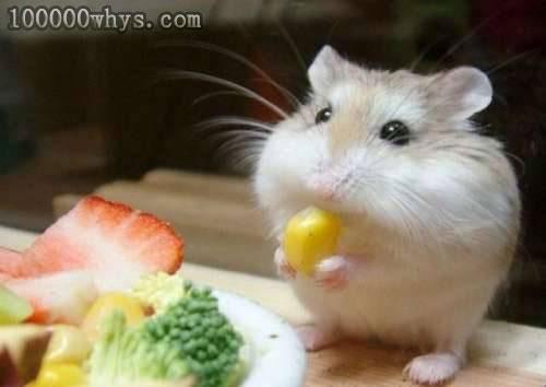 为什么所有的动物都要吃东西